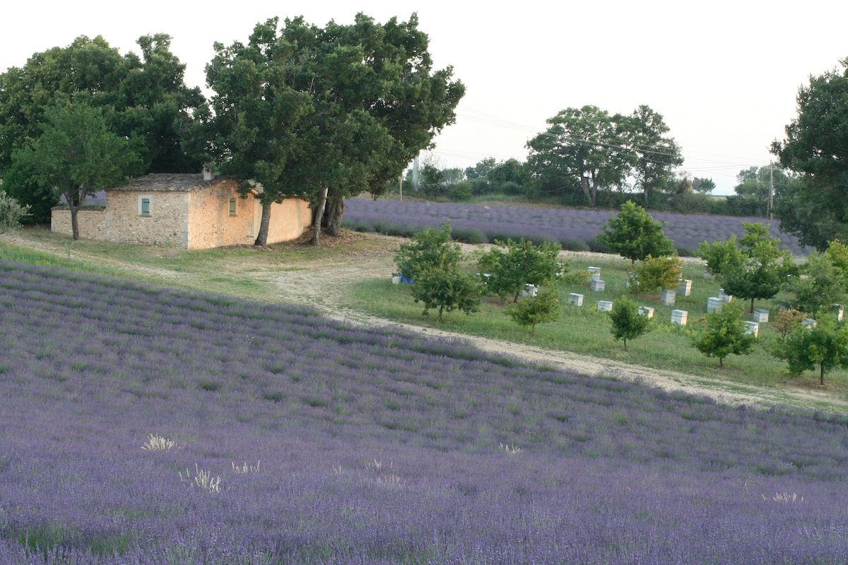 Provence 11