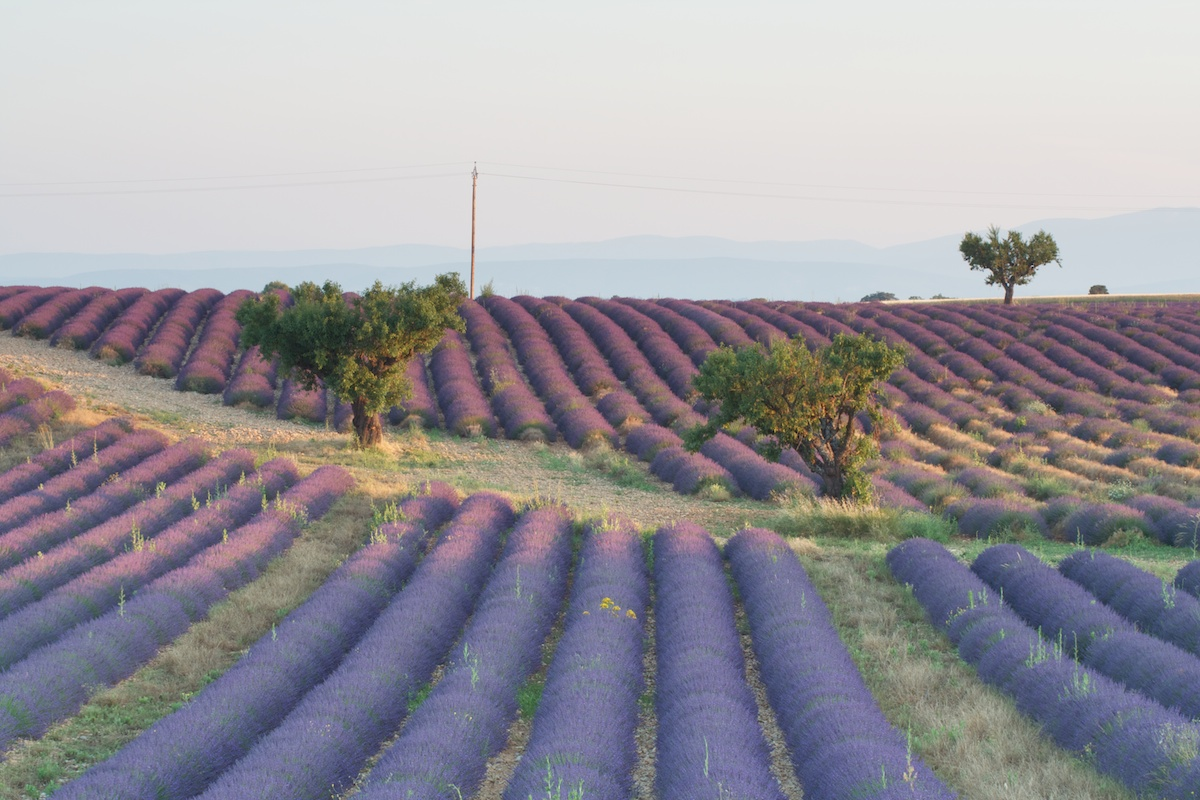 Provence 12