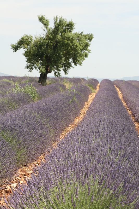Provence 08